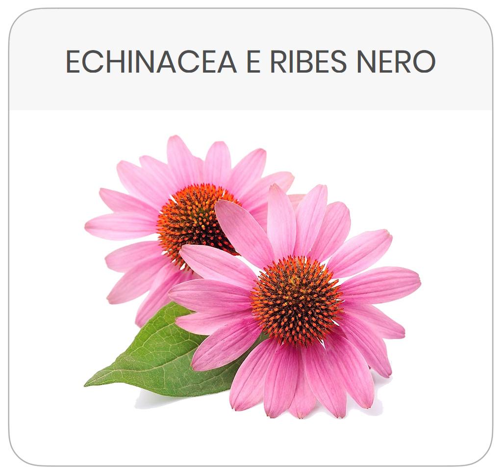 scheda-prodotto-echinacea-ribes-nero