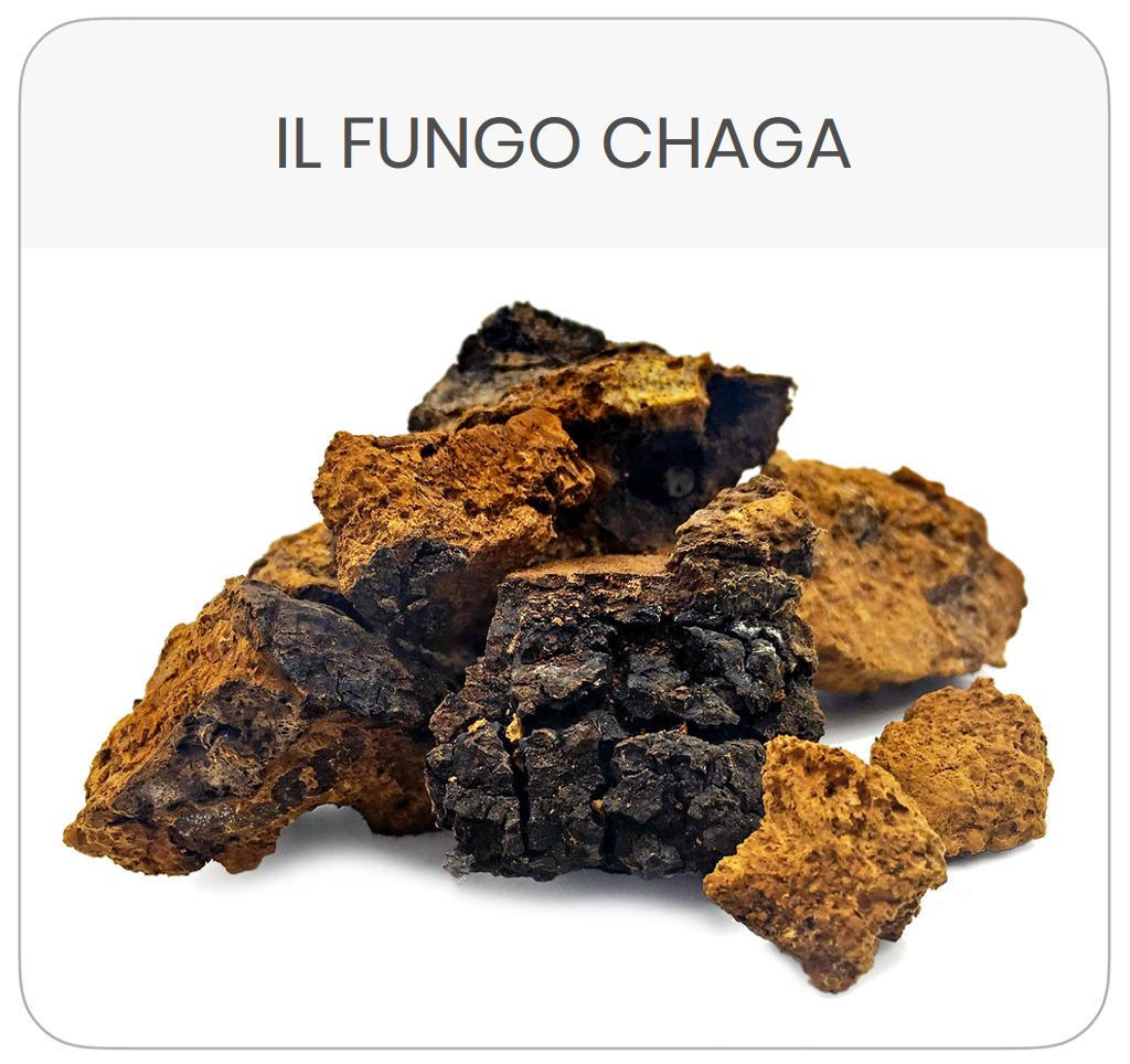 scheda-prodotto-fungo-chaga