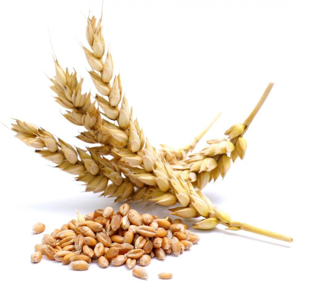 gluten-sensitivity-analisi